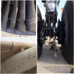 A321-flyet efter mødet med mindst 13 storke efter starten i Banjul. (Foto: Kayleigh Loveridge)